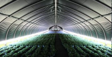 using light deprivation in a greenhouse allows you to increase crop yields