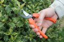 Harvesting Pruners