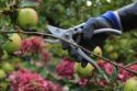 Silver Line Pruners - Curved