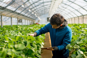 A young research student with a tablet computer in a greenhouse