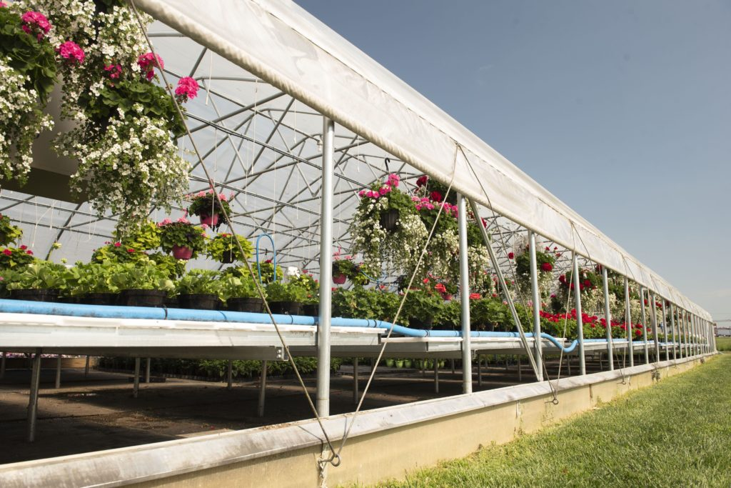 greenhouse with roll up sides for natural ventilation