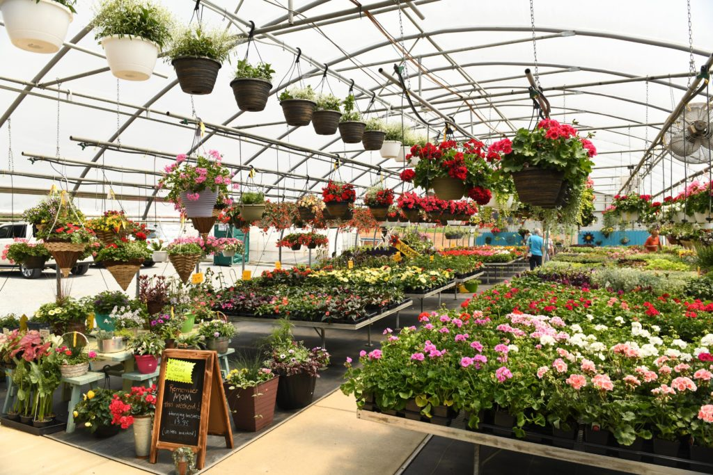 greenhouse selling flowers and plants