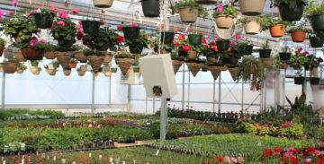 Flowers growing in greenhouse